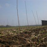 8_Robininenpflanzung