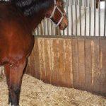Miscanhus-Einstreu-Pferdb0x