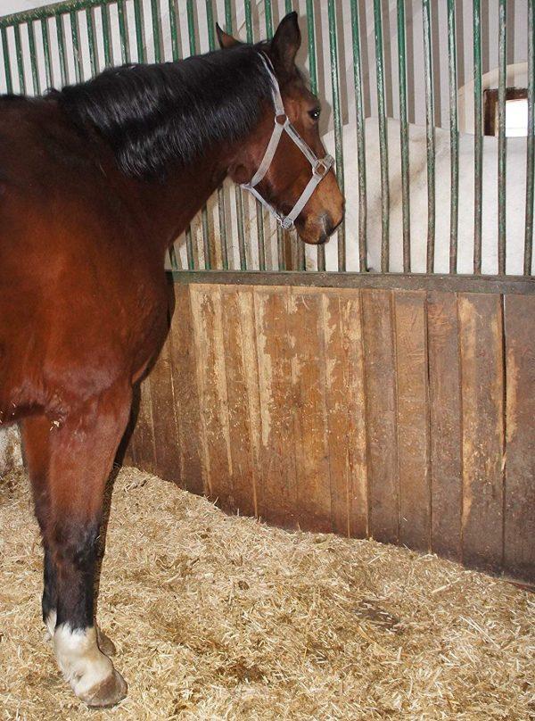 Miscanthus Einstreu Pferdebox