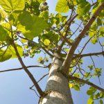 CO2-Klimabaum von WeGrow