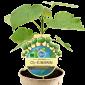 CO2 Klimabaum