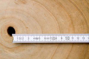 Paulownia Holz schnellwüchsig
